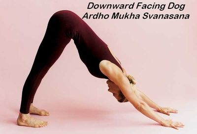 Downward Facing Dog Pose (Ardho Mukha Svanasana)