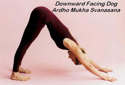 Downward Facing Dog Pose (Ardho Mukha Svanasana)