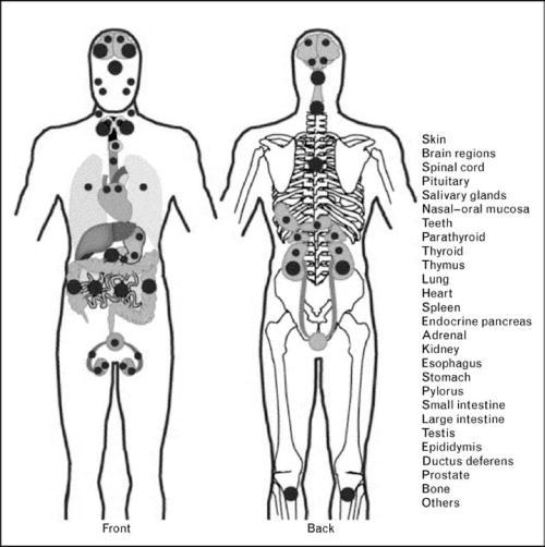 Vitamindrecptors