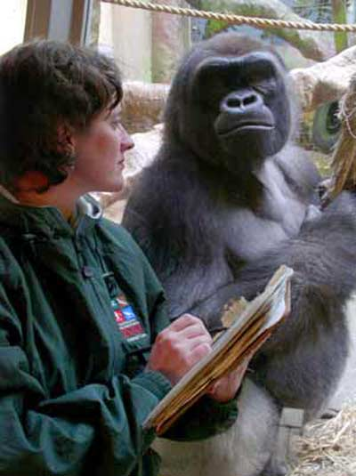 Kristen-lukas-cleveland-gorilla