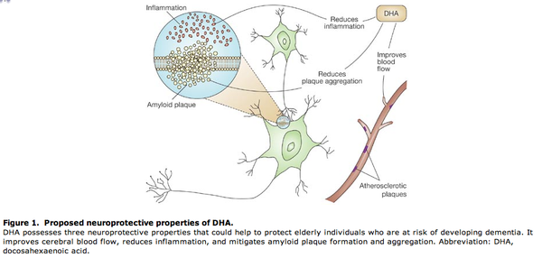 DHA and Neuroprotection