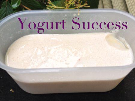Yogurt Success